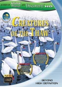 动物星球之解冻的生物/动物星球之海岸王国/动物星球之惊奇之岛
